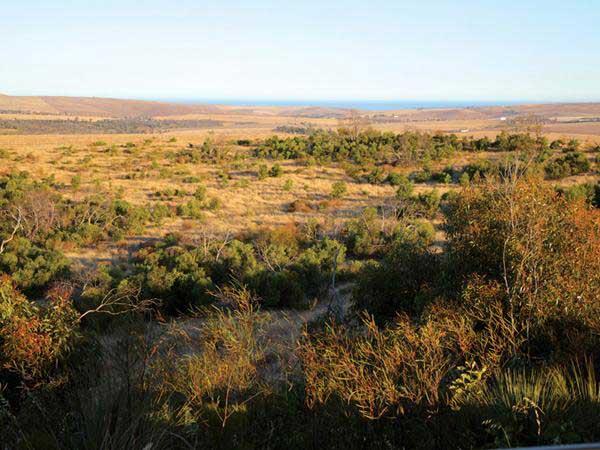 tanonga-view