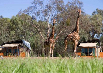 Zoofari Wildlife Safari, NSW