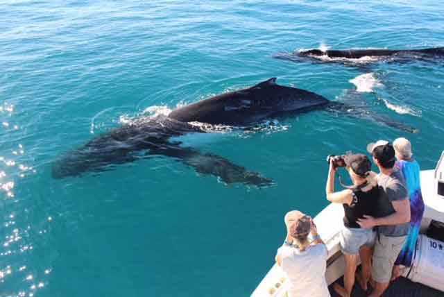 dolphin-cruises