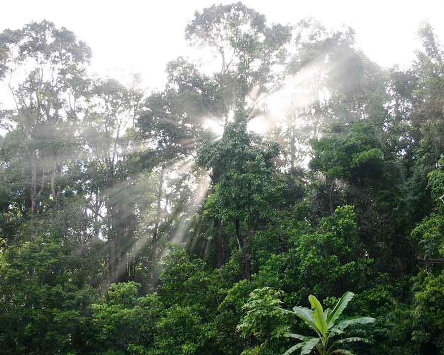 rainforest-canopy-treehouses