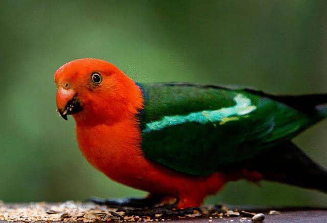 bird-canopy