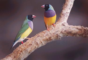 Jabiru Birds