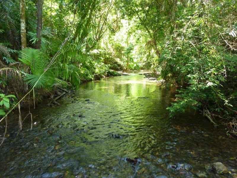 Wompoo Eco Retreat Daintree