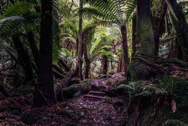 The Cob Barn Ferns