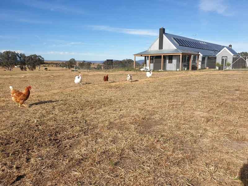 Farmhouse and chooks