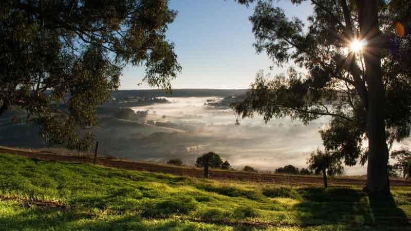 Balingup-Heights-Hilltop-Forest-Cottages-mist