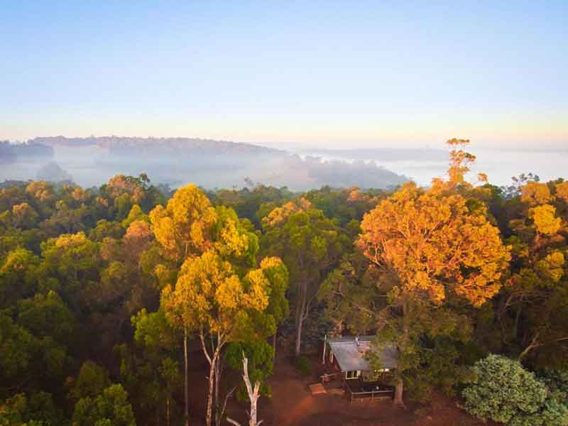 Balingup-Heights-Hilltop-Forest-Cottages-tree-view
