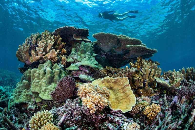 Wilson-Island-Reef-Snorkelling