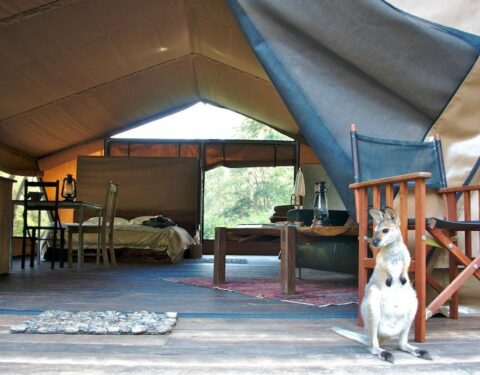 Nightfall Wilderness Camp. The ultimate Glamping experience!