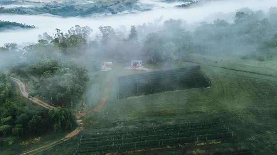 Kanimbla-Valley-Willow-Tree-Bend-aerial-mist