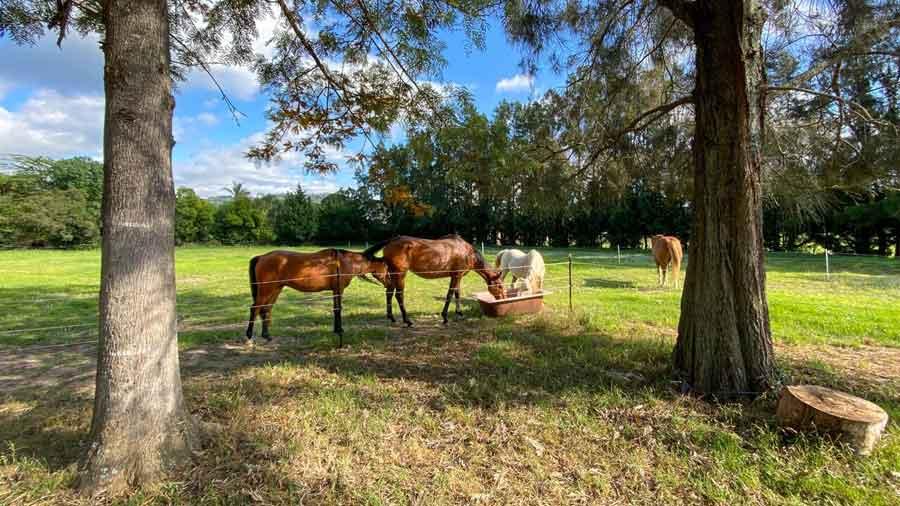 True-Colours-Tiny-House-horses
